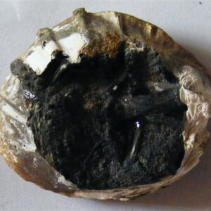 vivianite in fossil clam shell